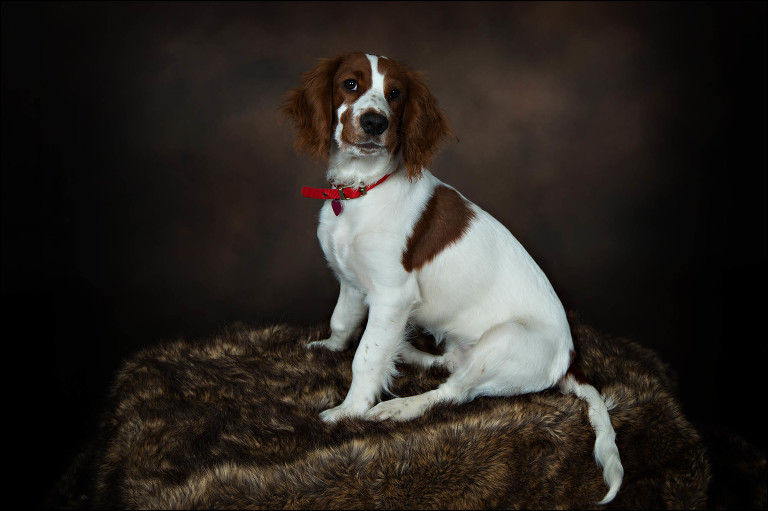 Pet photos Southampton, Pet portrait studio Hampshire, Pets join location, dog photos, cat photos, cute kittens,