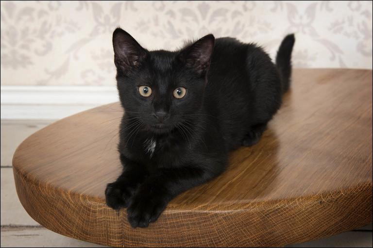 Pet photos Southampton, Pet portrait studio Hampshire, Pets join location, dog photos, cat photos, cute kittens,