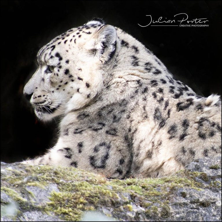 Photography courses Southampton at Marwell Zoo