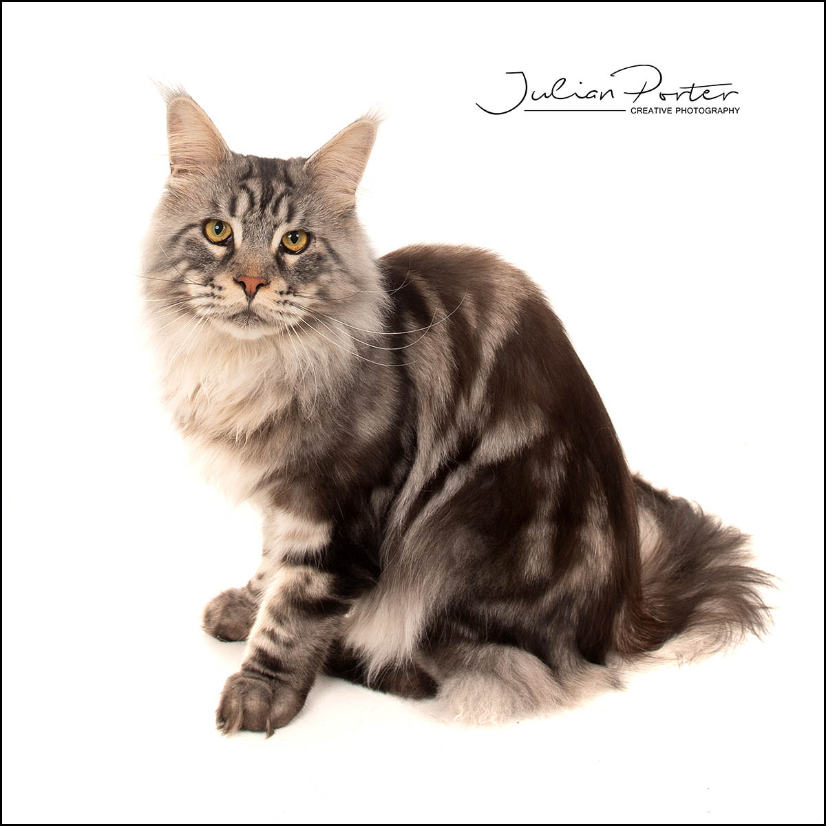 Oscar The Cats Photoshoot Julian Porter Photography